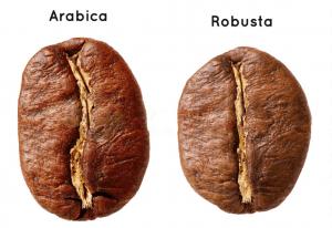Арабика или Робуста