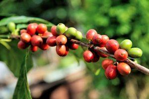 Белки, жиры, углеводы и минералы в кофе